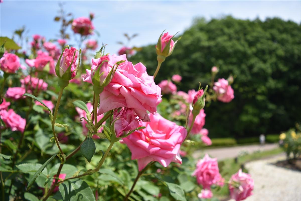花 フェスタ 記念 公園